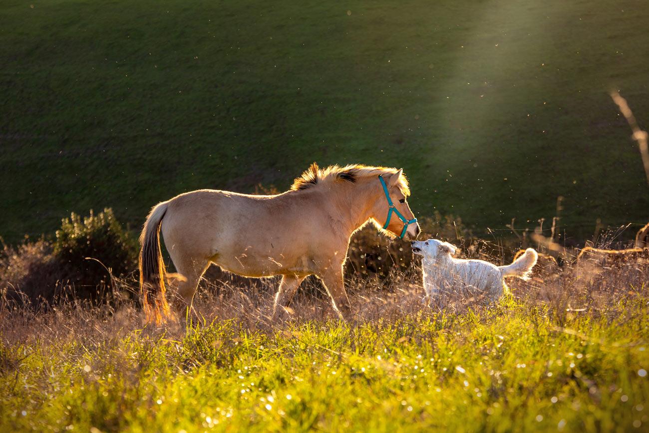 À la ferme, nous veillons au respect du bien-être animal et de l'environnement